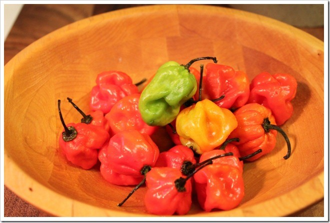 Eingelegte Habanero Peppers